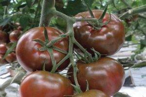 Томат тарпан: характеристика и описание сорта, выращивание с фото