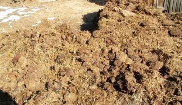 Коровяк: удобрение органического происхождения, способы применения