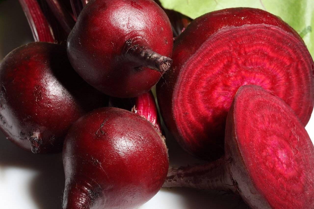 Как выбрать лучший сорт свёклы с большой урожайностью и минимум хлопот на грядках?