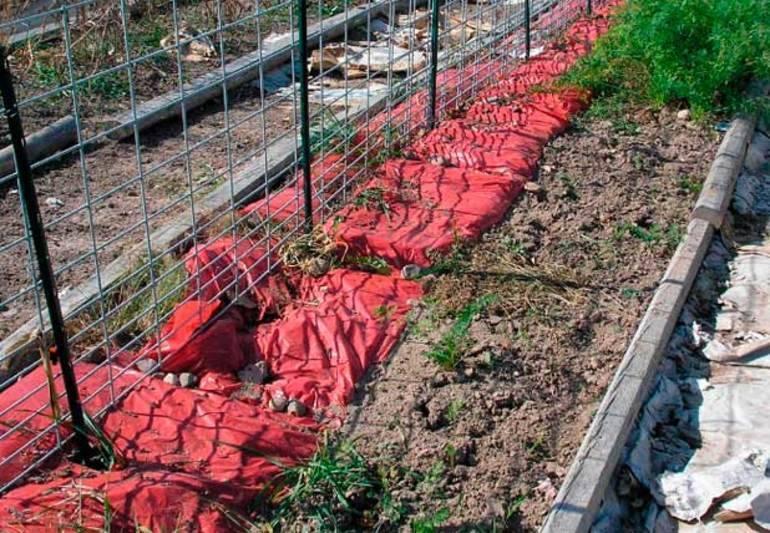 Подготовка винограда к зиме – основные правила садовода как сохранить урожай!