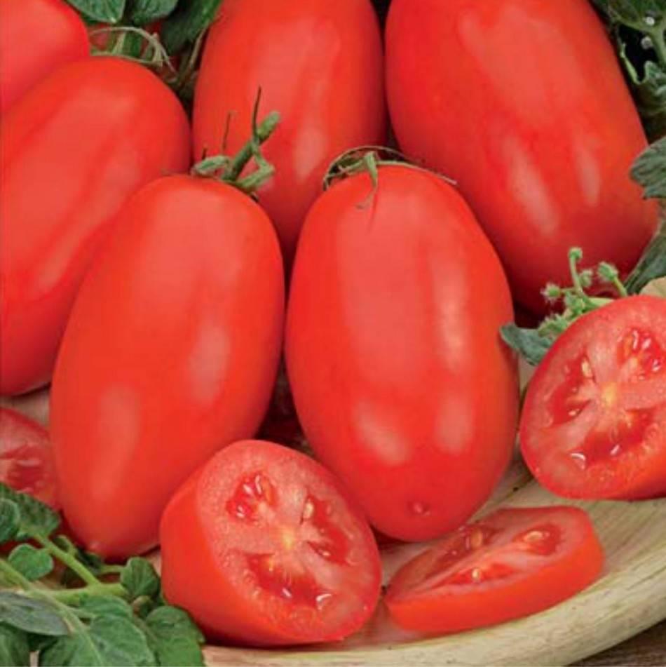 Высокоустойчивый сорт томата «москвич»: описание, характеристика, посев на рассаду, подкормка, урожайность, фото, видео и самые распространенные болезни томатов