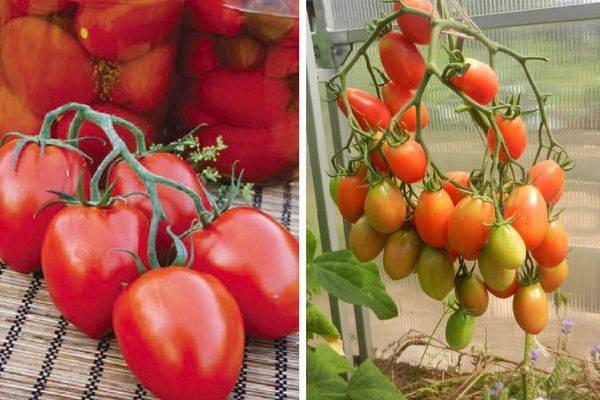 Томат демидов: характеристика и описание сорта, урожайность, отзывы