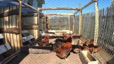 Как построить вольер для куриц своими руками?