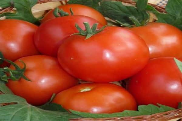 Описание сорта томат Пабло, урожайность и выращивание