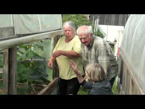 Супербыстрые всходы по японскому способу выращивания огурцов в опилках