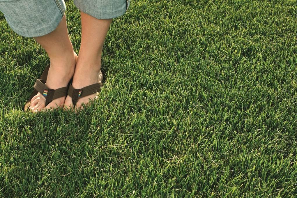 Какая газонная трава уничтожает сорняки? методы борьбы с сорняками на газоне