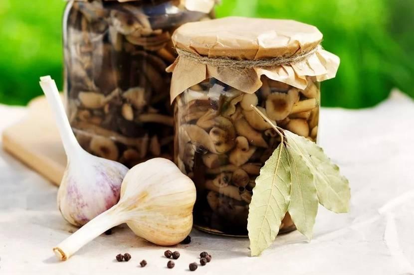 Белые грибы — рецепты приготовления вкусных белых грибов на зиму различными способами