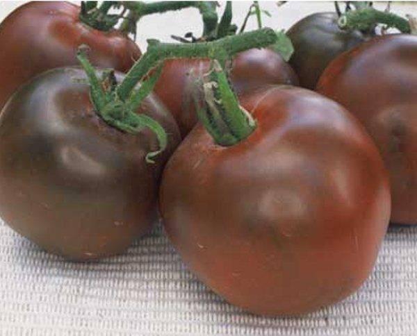 Особенности ухода за изумительной томатной культурой «черный принц»