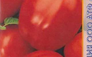 Популярные сорта ультраскороспелых томатов