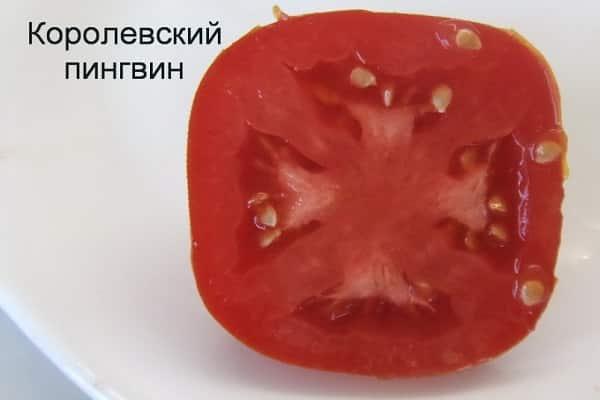 Прекрасный урожай в короткие сроки — сорт томата «король ранних» описание и характеристики