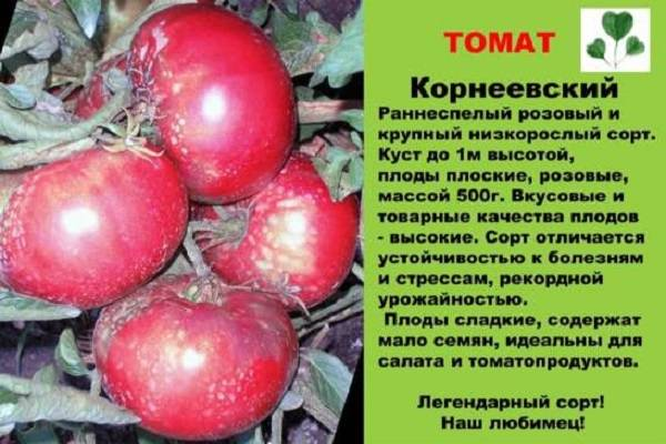 Сорт томата «корнеевский розовый»: описание, характеристика, посев на рассаду, подкормка, урожайность, фото, видео и самые распространенные болезни томатов