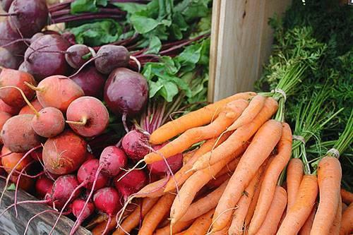Можно ли сажать свеклу или укроп и морковь на одной грядке