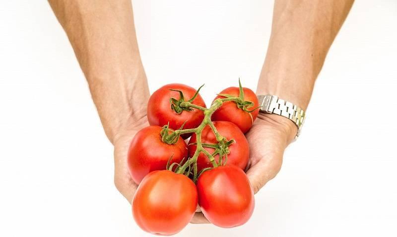 Описание сорта томата великосветский и его характеристики