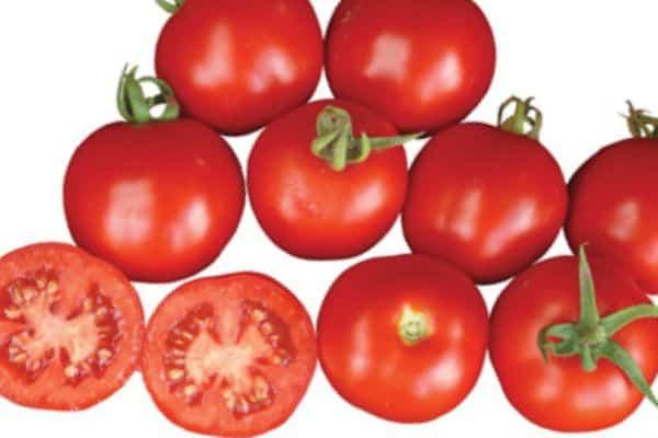 Что нужно знать о выращивании томата монгольский карлик?