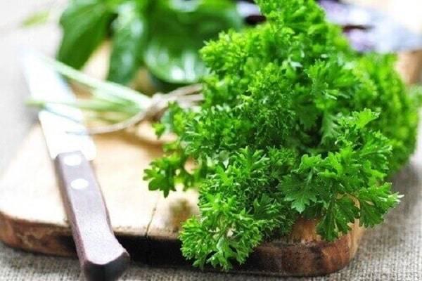 Петрушка (petroselinum) – известная огородная культура