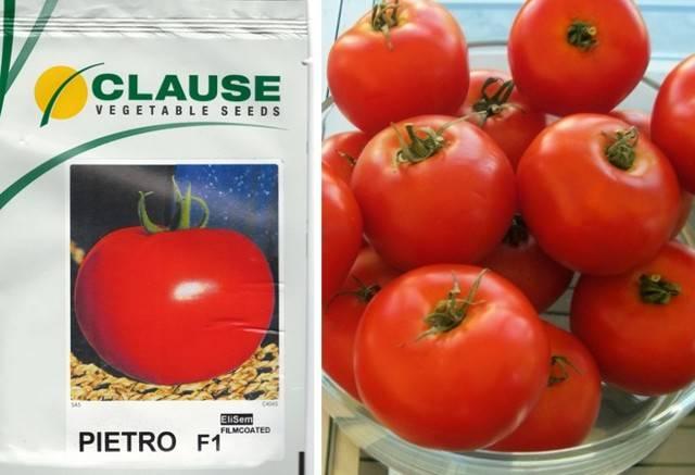Сорта помидоров сибирской селекции для посадки в 2020 году в открытый грунт или теплицу