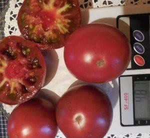 Описание сорта томата мохнатый кейт, его характеристика и урожайность