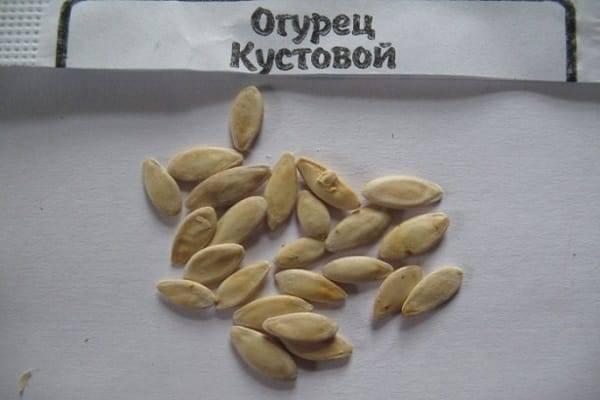 Как правильно подготовить семена огурцов перед посадкой в грунт