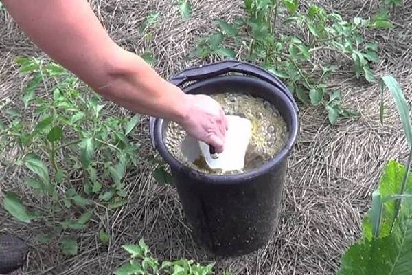 Обработка огурцов йодом, молоком - рецепты для защиты и подкормки