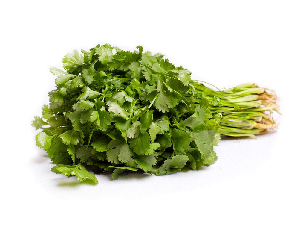 Кориандр овощной (кинза): выращивание, сорта, полезные свойства