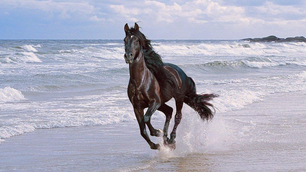 Какую максимальную скорость может развить лошадь