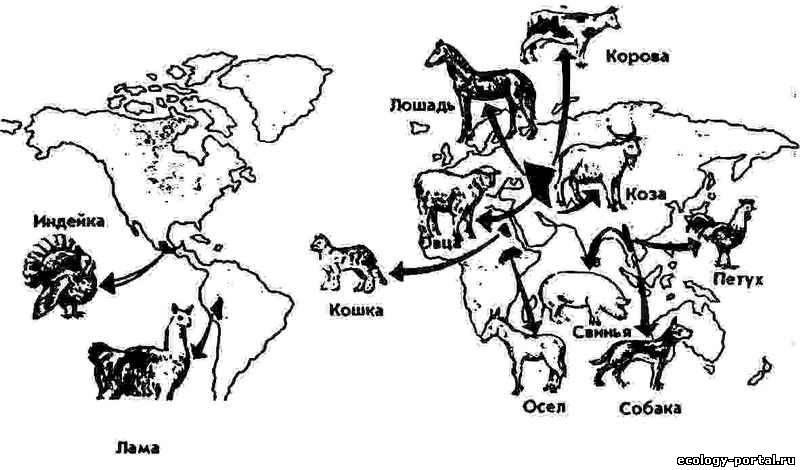 История происхождения и одомашнивания овец