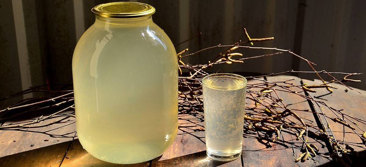 Березовый сок — рецепты консервации в домашних условиях