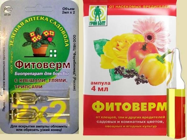 Фитоверм: применение и отзывы, инструкция как разводить и обрабатывать комнатные, садовые и огородные растения