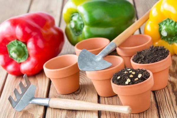 На какую глубину сажать семена помидоров в грунт и при пикировке? практические советы