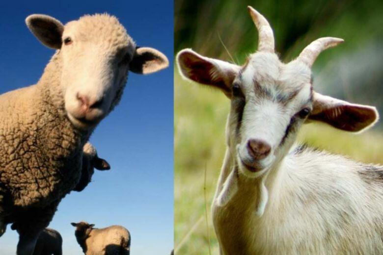 Как защитить корову от клещей — препараты и народные средства