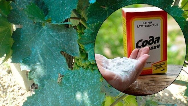 Уход за огородом: метод опрыскивания содой