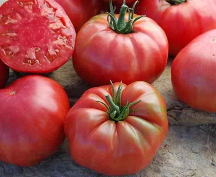 Описание сорта томата Бизон желтый, его характеристика и выращивание
