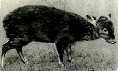 Инструкция по применению средства апачи от колорадского жука, как разводить