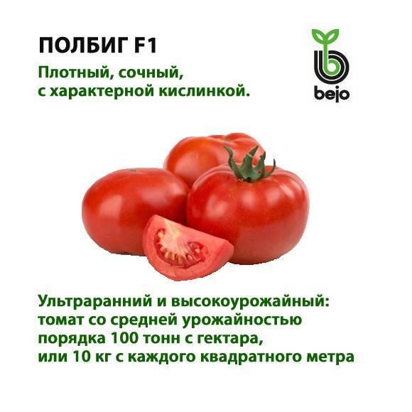 Высокоустойчивый сорт томата «полбиг f1» — гибрид голландской селекции: описание, характеристика, посев на рассаду, подкормка, урожайность, фото, видео и самые распространенные болезни томатов