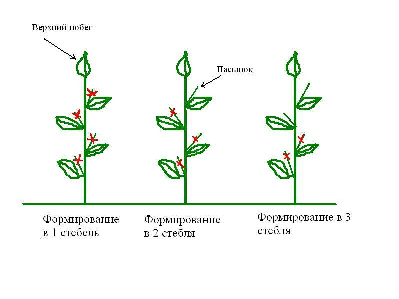 Как формировать перец в теплице и открытом грунте
