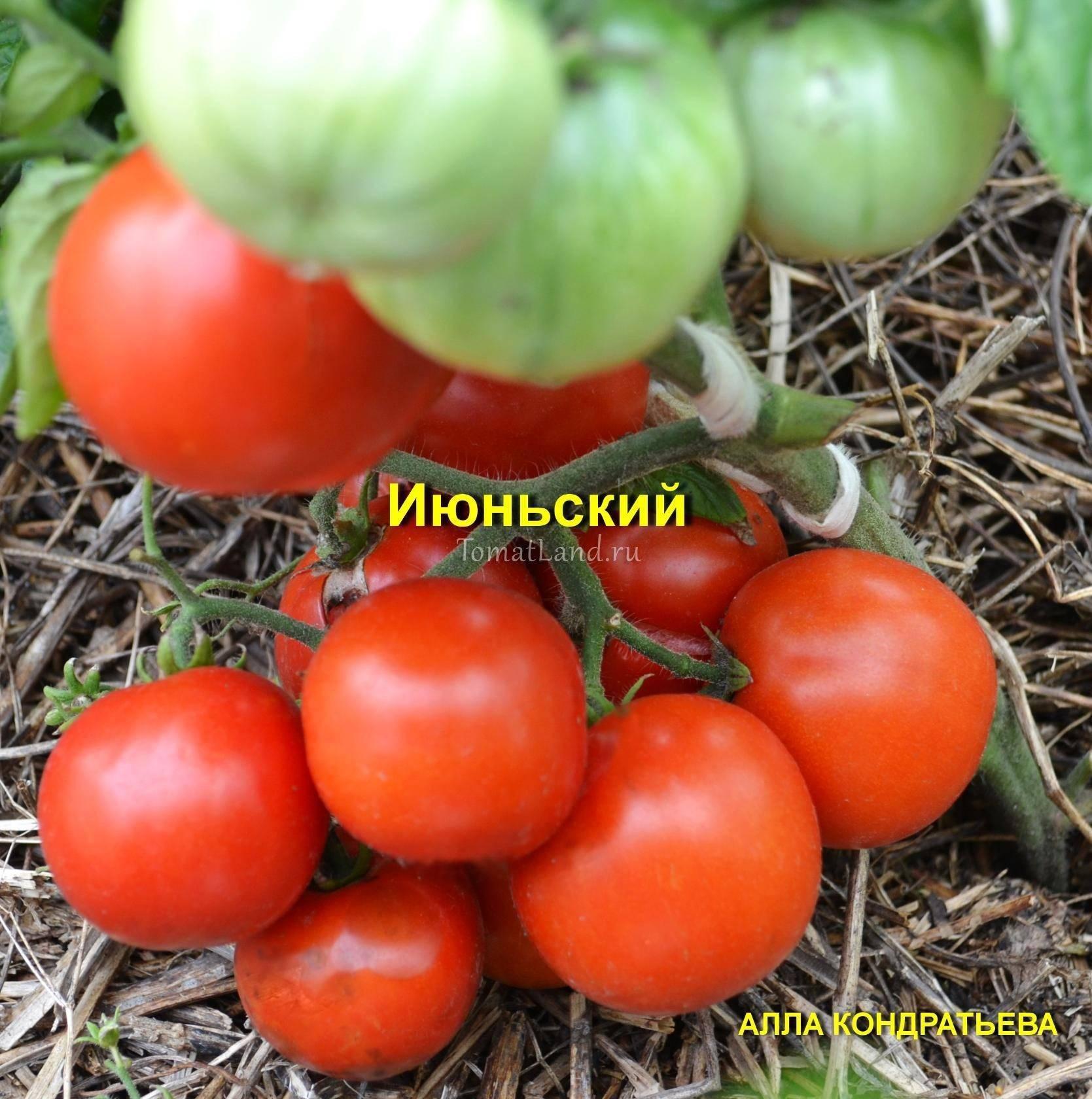 Описание сорта томата Июньский и его характеристики