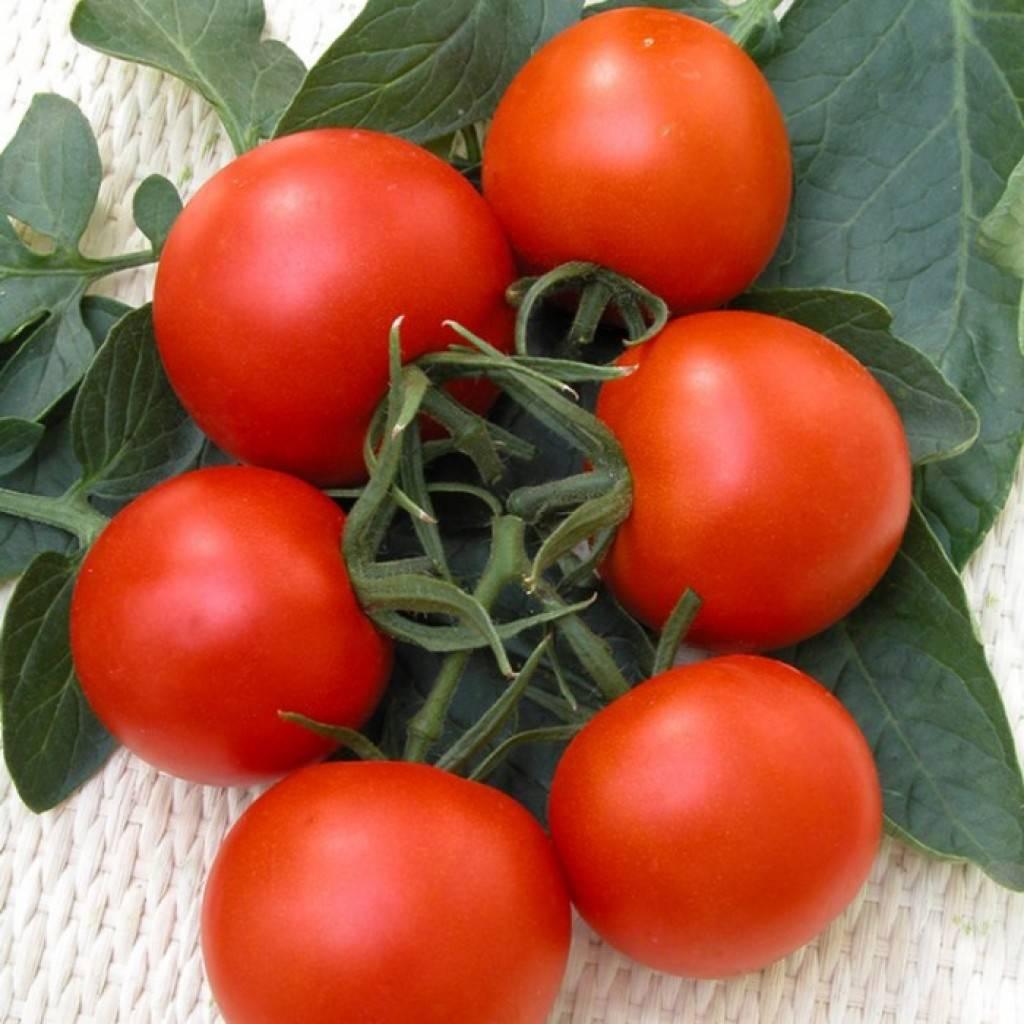 «розовые щечки» – помидоры, способные очаровать самого требовательного садовода