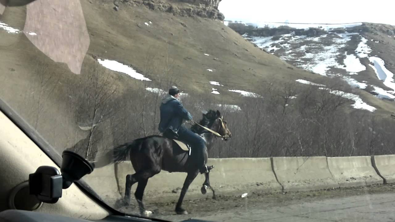 Характеристика якутской породы лошади, уход, содержание и разведение