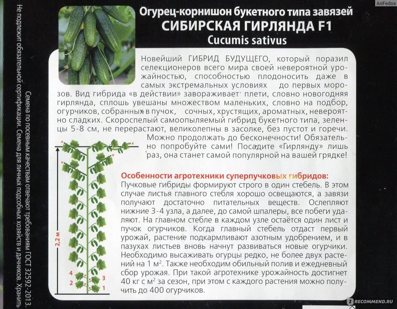 Огурцы сибирская гирлянда f1