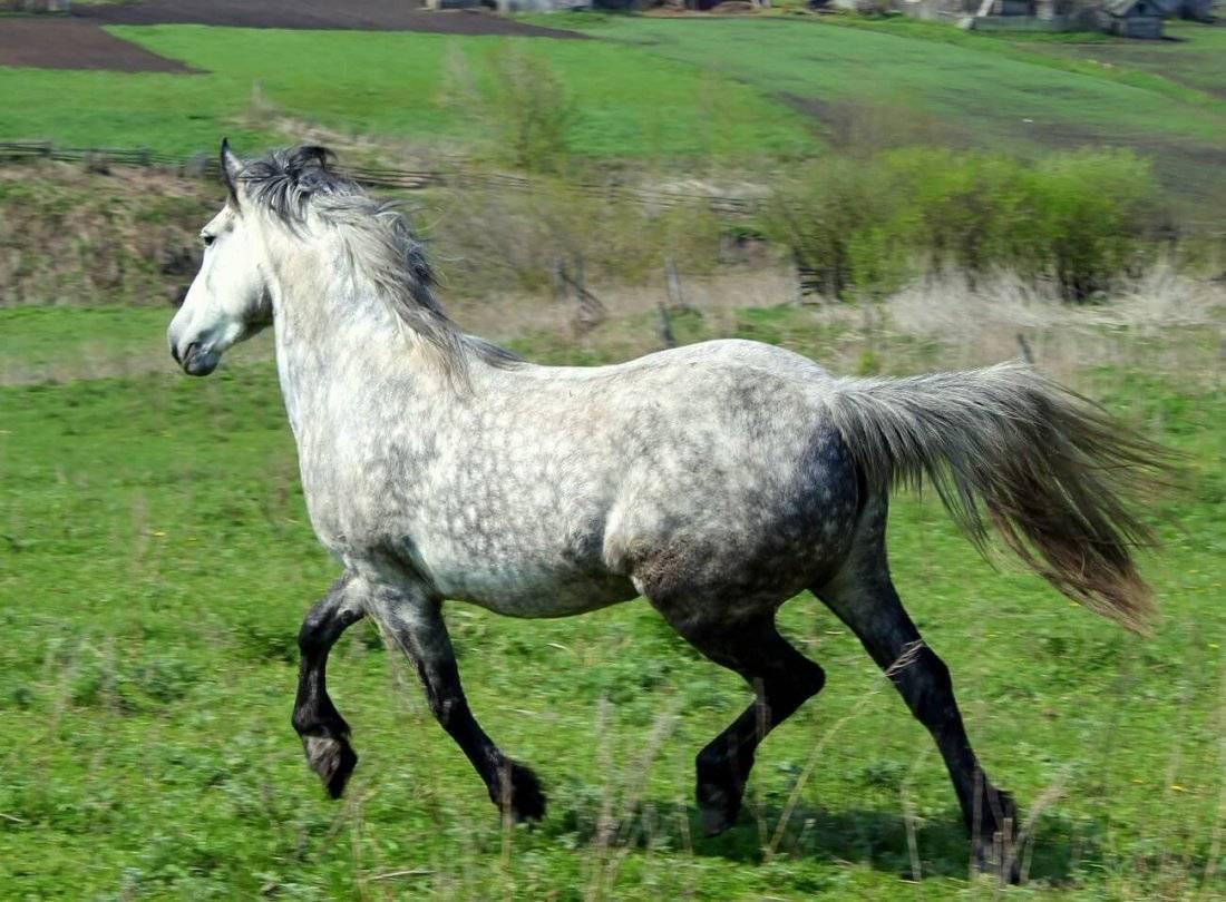 Самая сильная и выносливая лошадь, лучшие рекордсмены