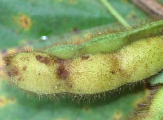 Паутинный клещ — вездесущий вредитель