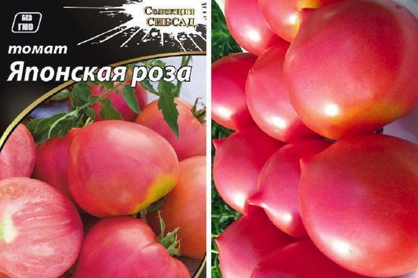 Характеристика и описание сорта томата дикая роза, его урожайность