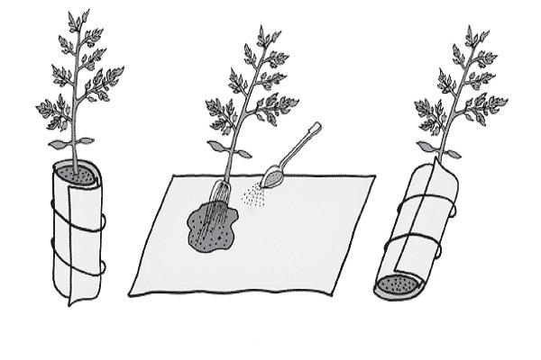 Метод галины кизимы: помидоры не поливать!