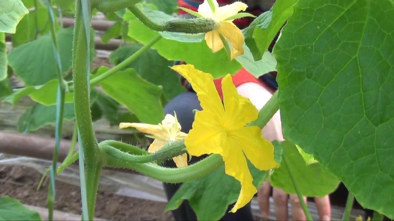 Рыхление и окучивание почвы: важные агротехнические приемы для повышения урожайности