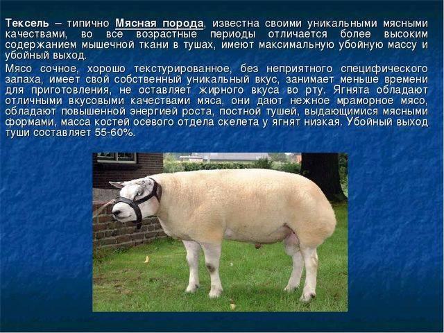 Овцеводство и скотоводство в мире, в частности, в россии и австралии
