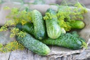 Описание сорта огурцов Спино, особенности выращивания и ухода