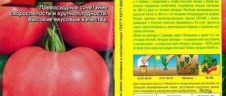 Описание помидор «розовые щечки»