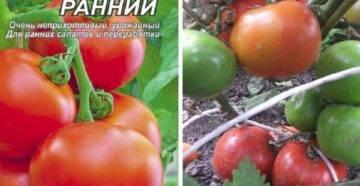 Описание сорта томата северная королева, особенности выращивания и ухода