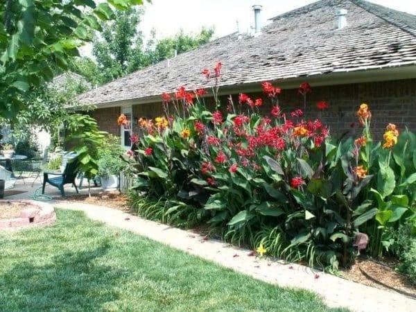 Создаем цветник в тропическом стиле с помощью посадки канны