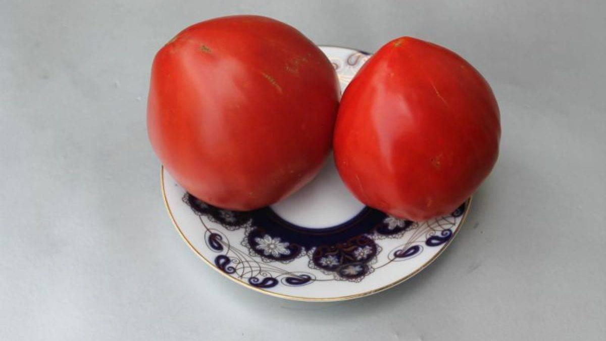 Характеристика и описание гибрида томат «добрый f1»